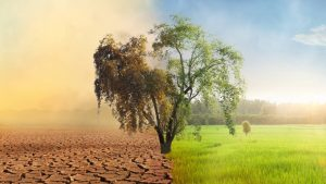 combating negative environmental impact with sustainable data centres